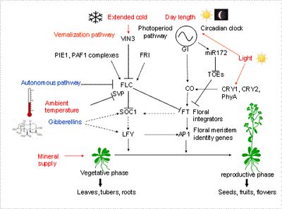 State of the art — SPP 1530: Flowering Time Control - from ...