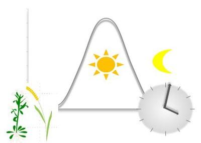 circadian_regulation