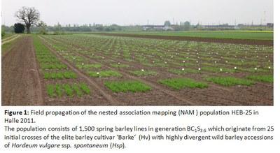 NAM population